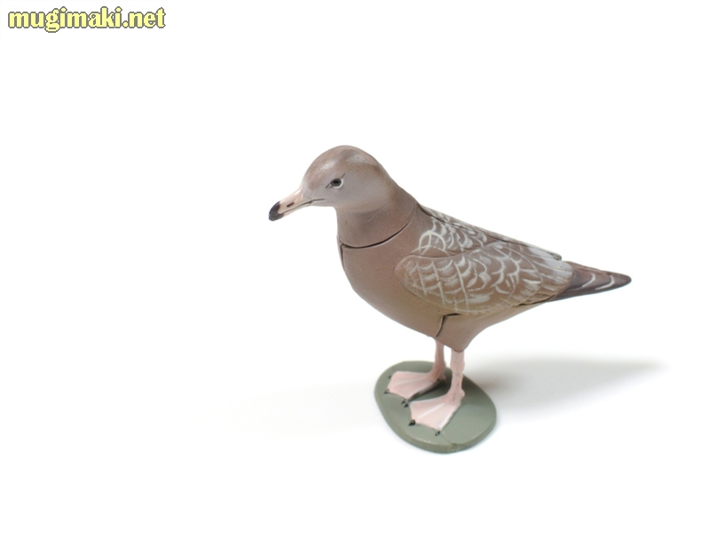 ウミネコ(幼鳥)