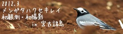 mugimaki.net